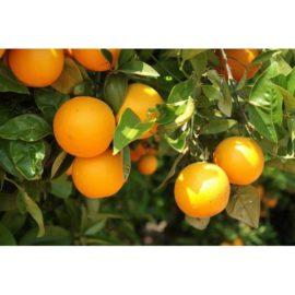 Huiles essentielles Orange douce 5ml