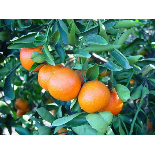 Huiles essentielles Mandarine 5ml