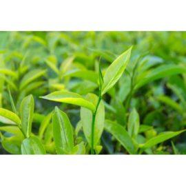 Huiles essentielles Tea tree 5ml