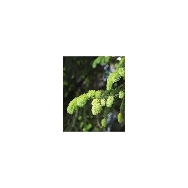 Huiles essentielles Epicea commun 5ml
