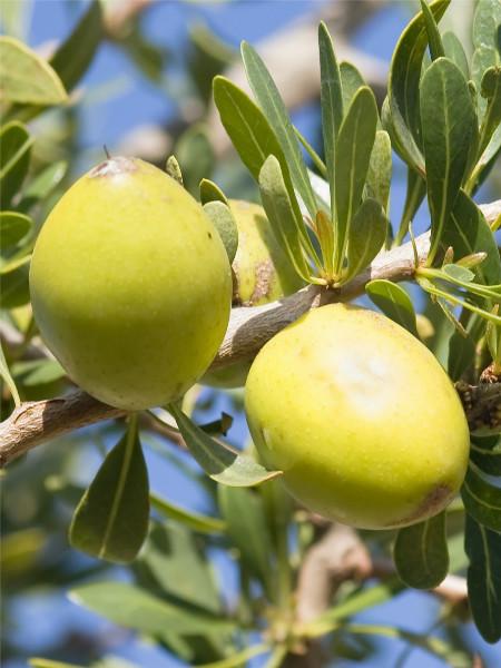 Huile d'Argan du Maroc bio 60 ml
