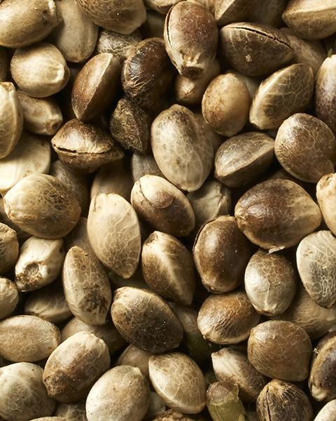 Huile de graines de Chanvre bio 60 ml